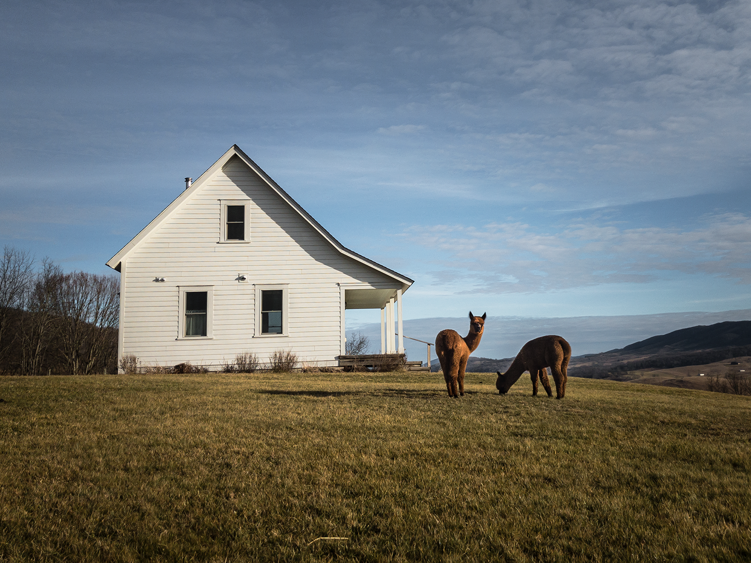 Mill Gap Farms Cottage with Alpacas